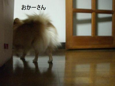 2009_0105_164211cimg0220