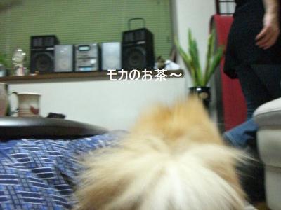 2009_0105_164441cimg0233