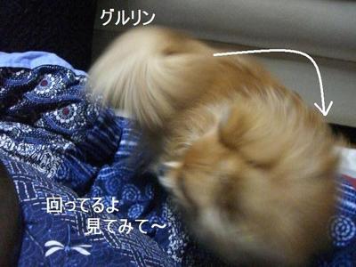 2009_0105_164854cimg0249