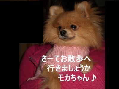 2009_0115_161227cimg0325
