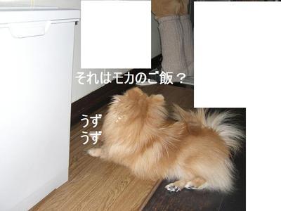 2009_0115_150838cimg0284