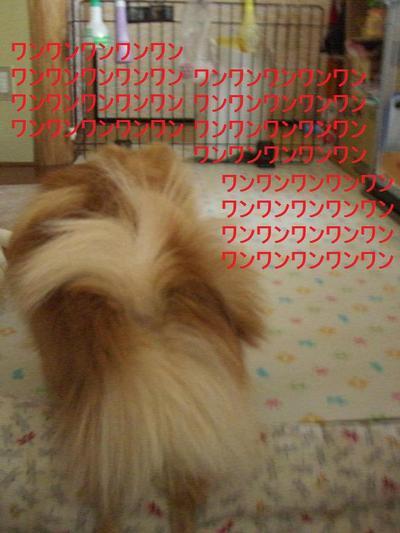 2009_0115_152127cimg0298