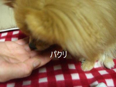 2009_0131_212854cimg0543