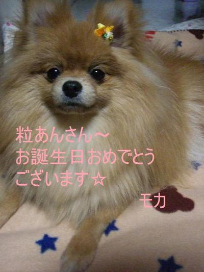 2009_0220_195743cimg0977
