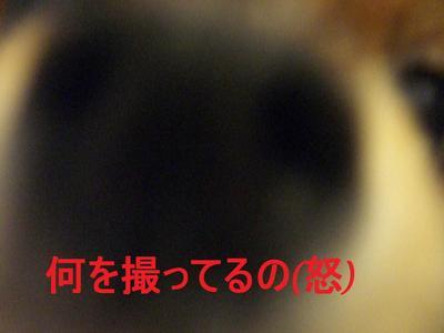 2009_0421_133023cimg2147