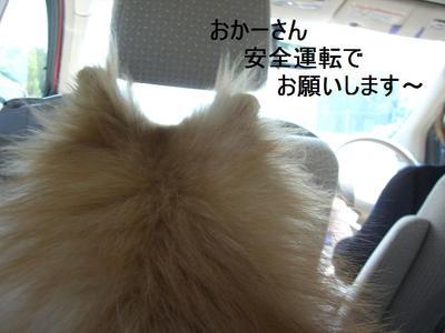 2009_0512_125051cimg2581_2