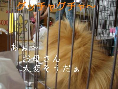 2009_0521_144733cimg2767