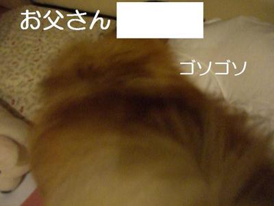 2009_0522_223140cimg2769