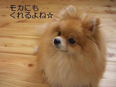 2009_0527_090017cimg2791