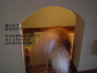 2009_0608_155504cimg0899