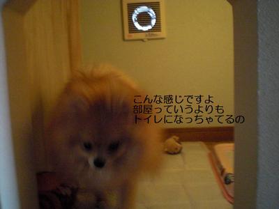 2009_0608_155527cimg0900