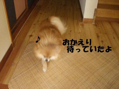 2009_0617_112652cimg3144