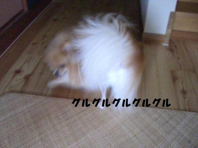 2009_0618_084150cimg3249