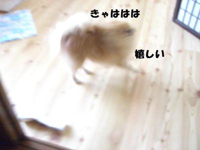 2009_0618_084202cimg3251