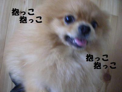 2009_0618_084206cimg3253