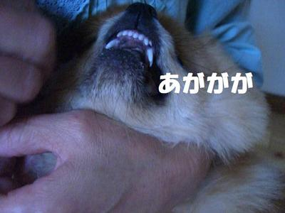 2009_0625_150852cimg3540