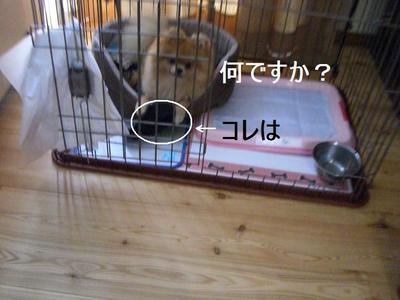 2009_0630_165943cimg3671