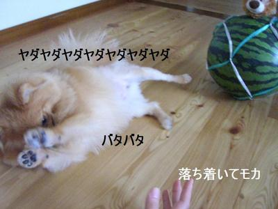 2009_0701_150935cimg3693