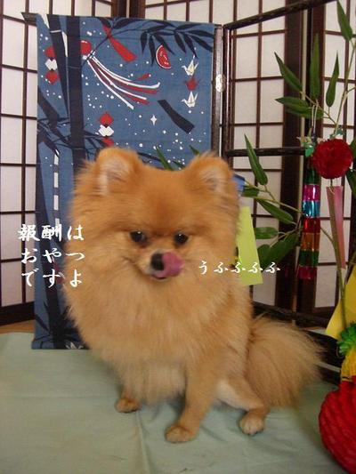 2009_0706_145650cimg3849
