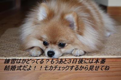 2009_1130_035629img_0128