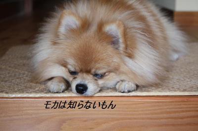 2009_1130_035631img_0129
